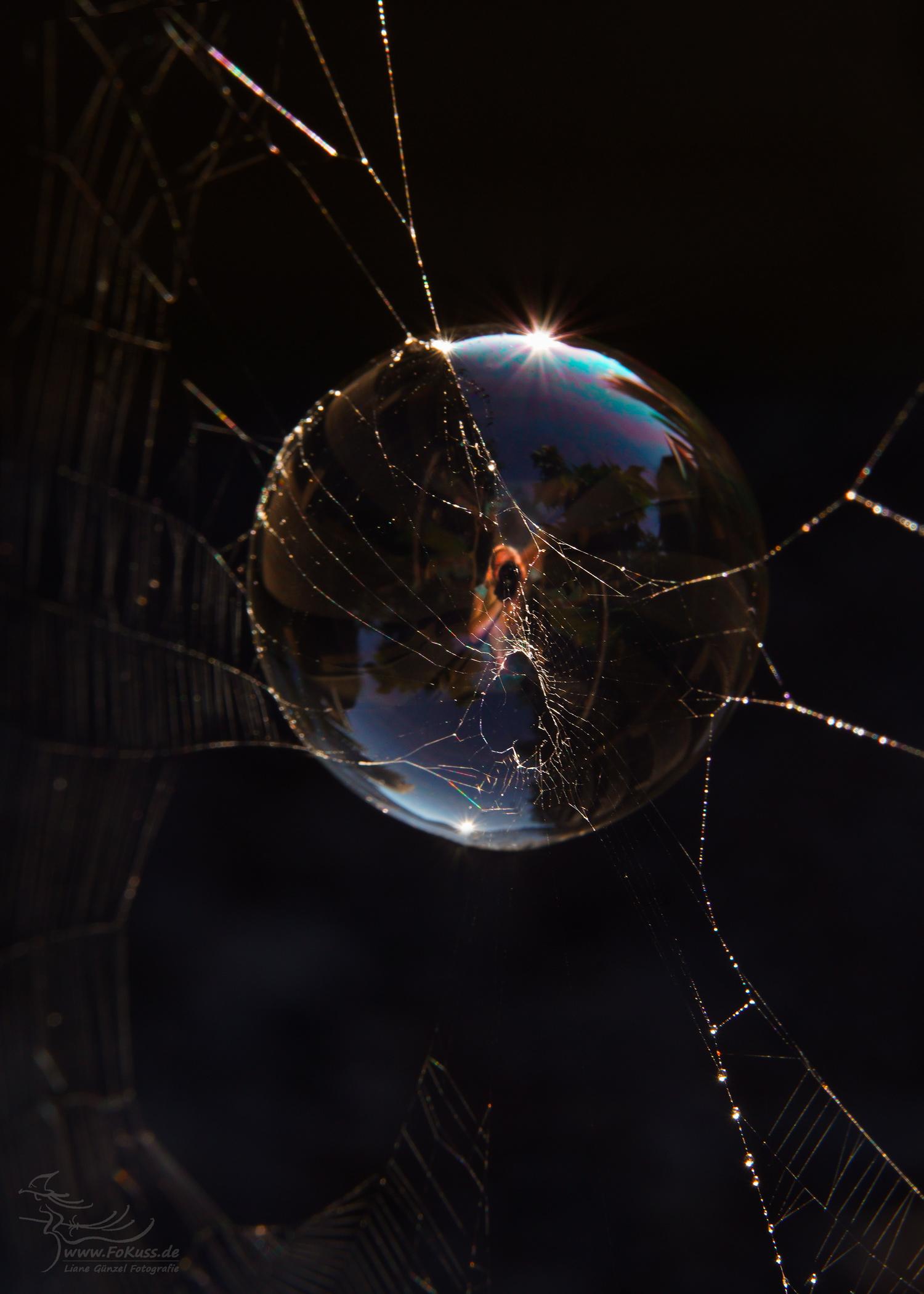 Selfi  Seifenblase im HERZlichen Spinnennetz