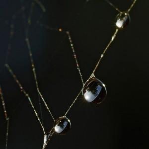 Morgentau im Spinnenetz